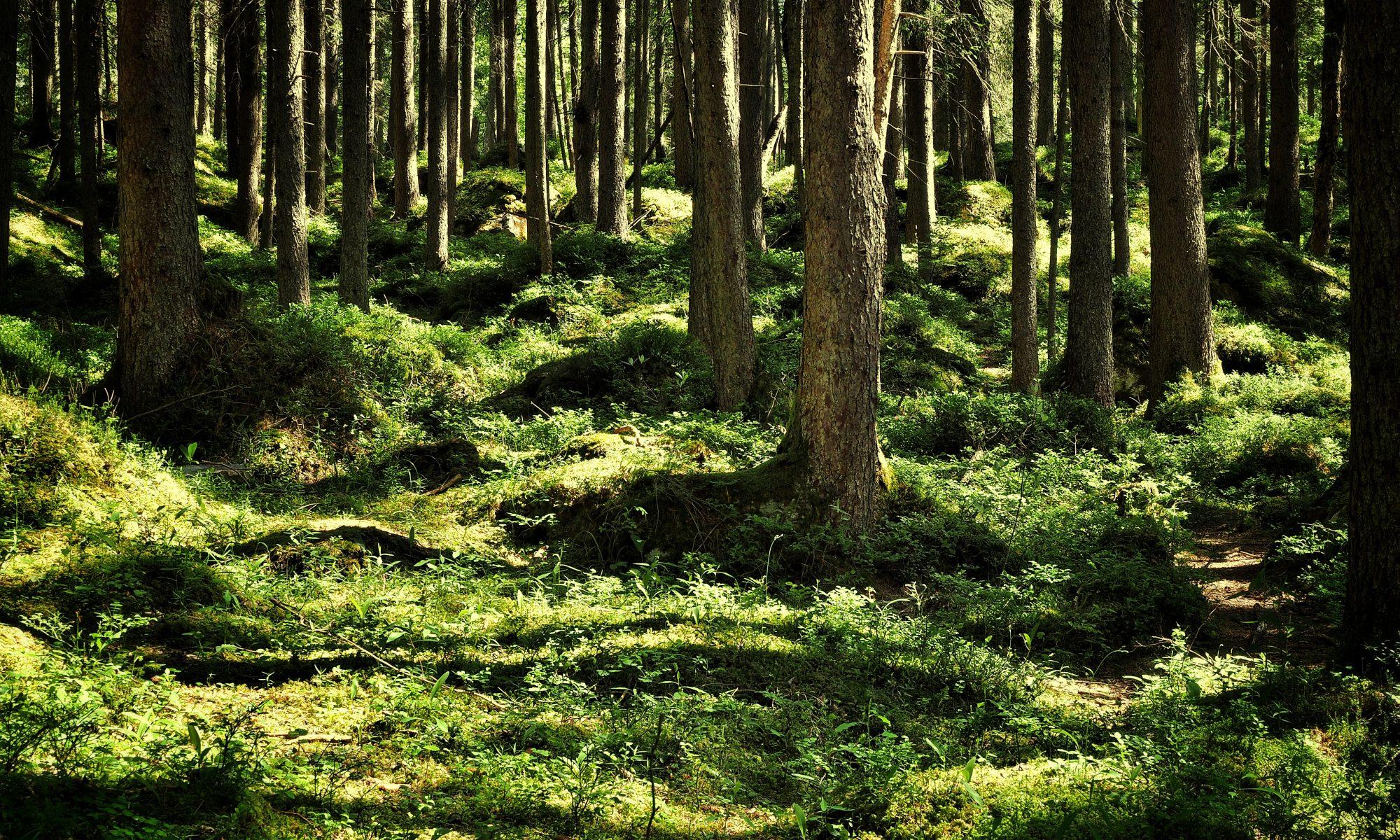 Foto Waldboden