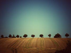 Foto Feld mit starker Vignettierung